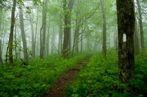 appalachian-trail-mist-500px-rroman